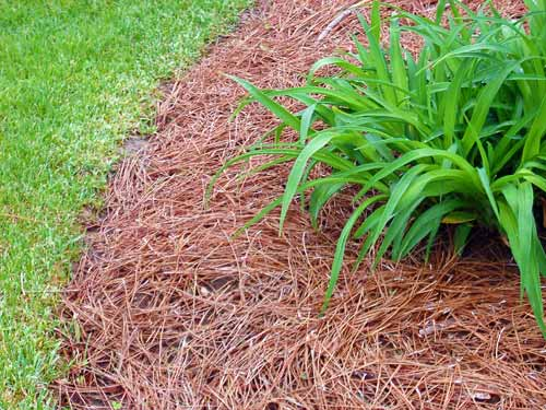 Gardening Tips – Keeping your plants alive in summer & winter